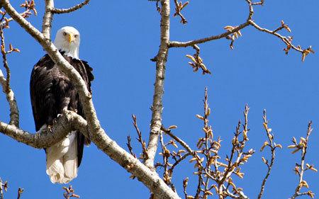 _eagle2