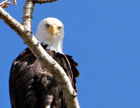 _eagle2copy